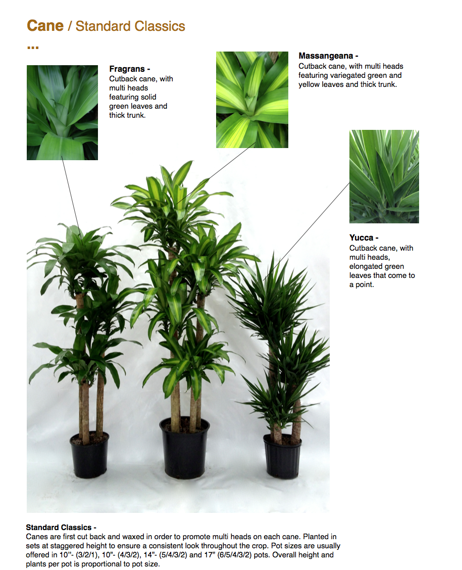 Tropical indoor plants images modern tall indoor plants for Classic house plants