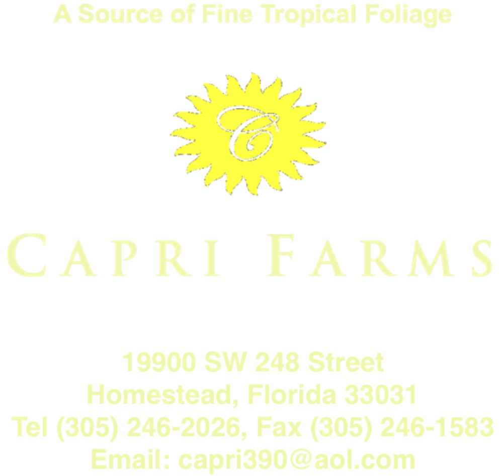 Capri Farms  – A Source of Fine Tropical Foliage | Tropical Foliage | High Quality Tropical Foliage | Premium Foliage Grower | Aglaonemas | Elite Aglaonemas | Classic Aglaonemas | Colored Aglaonemas | Daniella Ficus | Lyrata Bush | Dracaenas | Marginata Open Weave Braid | Hawaiian Sunshine Dracaena | Arboricola Open Weave Braid | Chamaedorea | Pothos | Canes | Pyramid Totems | Massageana | Spathiphyllums | Sansevierias | Scheffleras | Exotic Foliage | Interior Foliage | Indoor Plants | Interiorscape | Interiorscapers | Premium Garden Centers | Brokers |