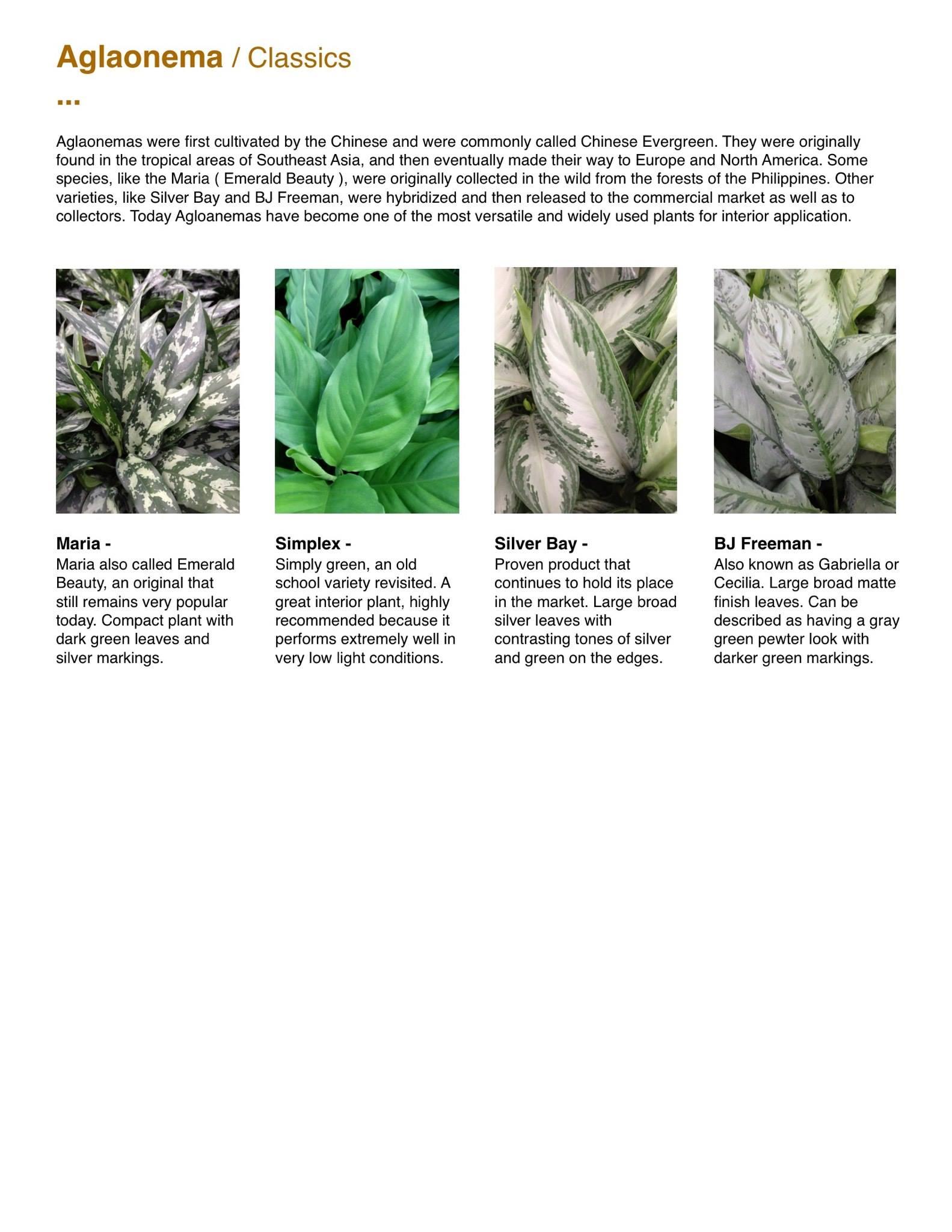 Capri Farms Slideshow - Page 04