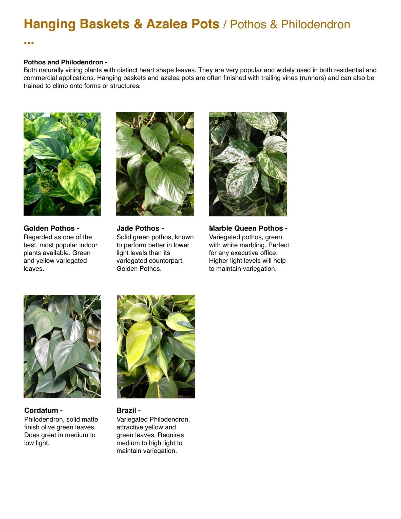 Capri Farms Slideshow - Page 29
