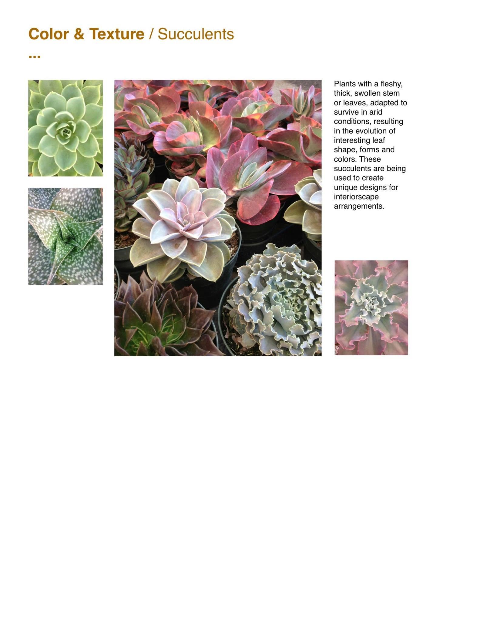 Capri Farms Slideshow - Page 34